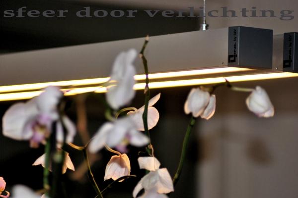 orchidee59631E18-E787-F946-93A8-E05CF7ECF383.jpg